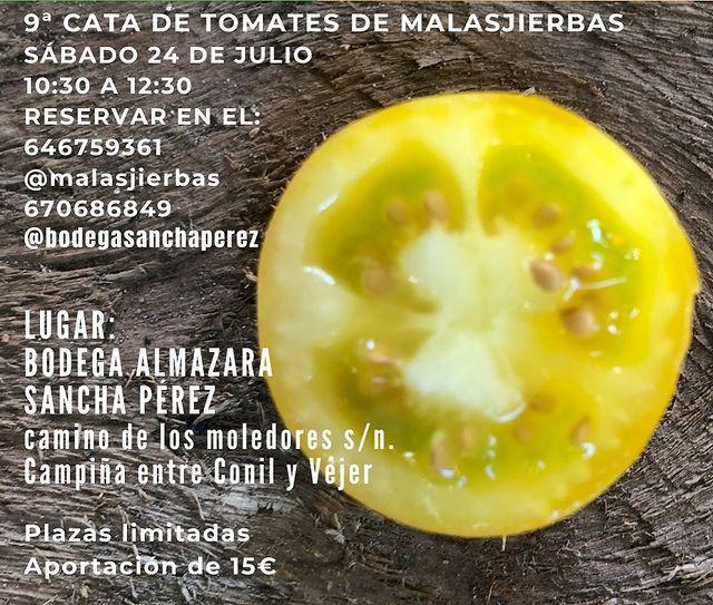 9 Cata de Tomates de Malasjierbas en Bodega Sancha Pérez