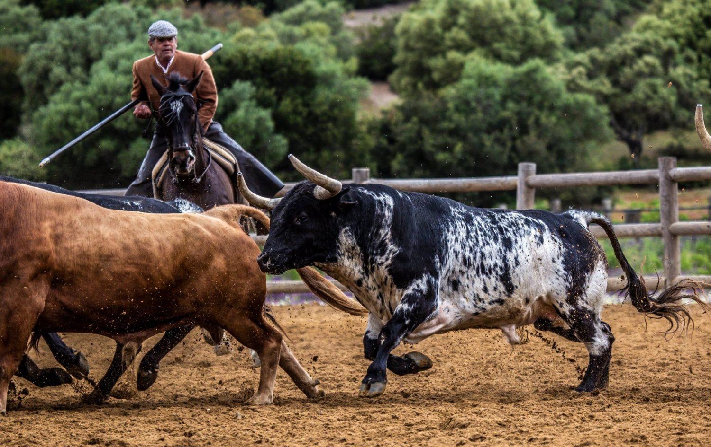 Vistita a la ganadería de Torrestrella